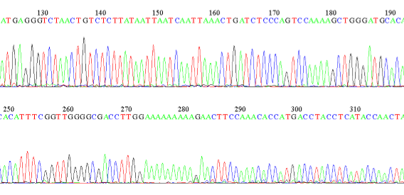 picture of sequence